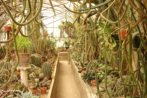 Palm springs less traveled colin 39 s palm springs getaway - Moorten botanical garden and cactarium ...